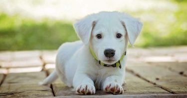 旅立った犬に生まれ変わりはあるのか? 愛犬と再会する方法とは?
