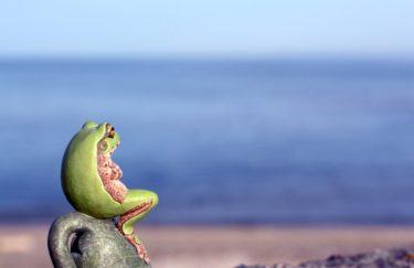 カエルは非常に縁起の良い動物 特別種である黄金蛙も紹介。