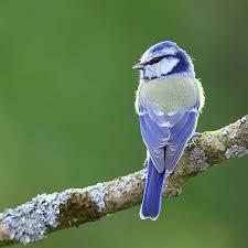 鳥のフンのスピリチュアル的な意味 幸福やお金を得るサイン!?